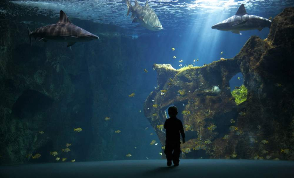 Aquarium de La Rochelle pour Osram