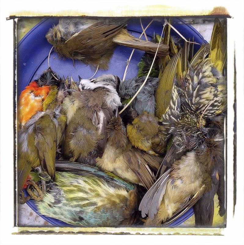 Je me demandais pourquoi au Laos on entend pas chanter les oiseaux...parce qu'ils les mangent !!! Marché de Louang Namtha, Laos